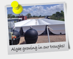 eNewsletter February 2014 - Algae growing in our troughs!
