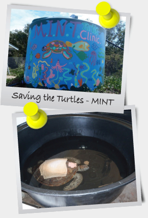 eNewsletter October 2013 - Saving the Turtles - MINT